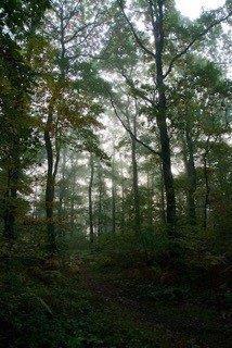 Forêt de Grimbosc (P. Boyer)