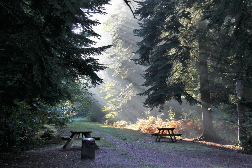 Forêt de Grimbosq (G. Fermy)